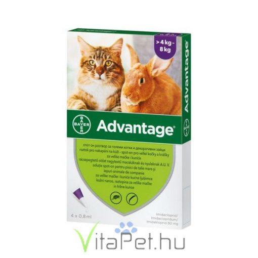 Advantage 80 Cat/Rab 4 x 0,8 ml